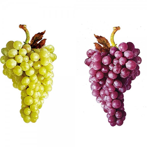 Weintraube Druck grün-bordeaux, 13 x 24 cm