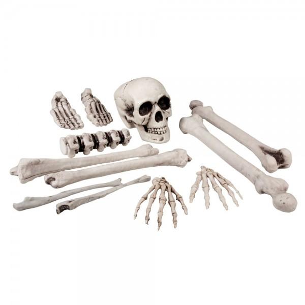 Skelett Knochen-Set 12-teilig 15-40 cm