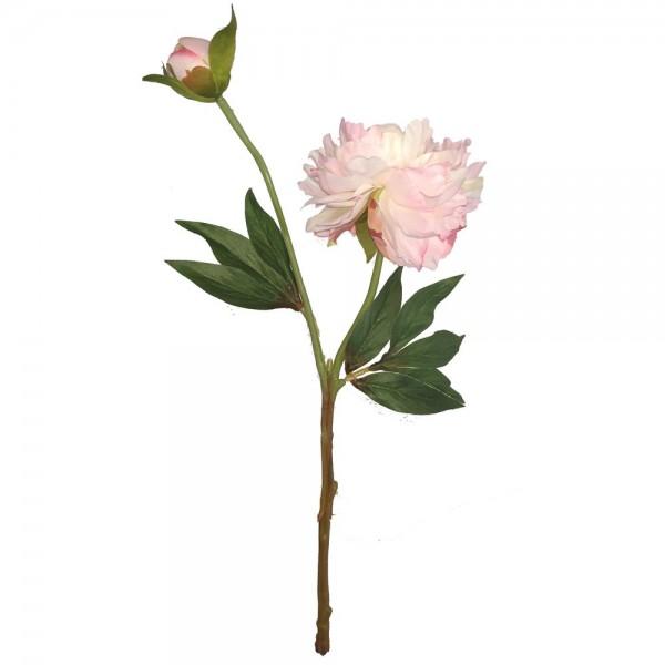 Pfingstrose mit Knospe rosa, 37 cm