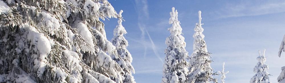 Künstliche Weihnachtsbäume aus dem Hause Langnickel