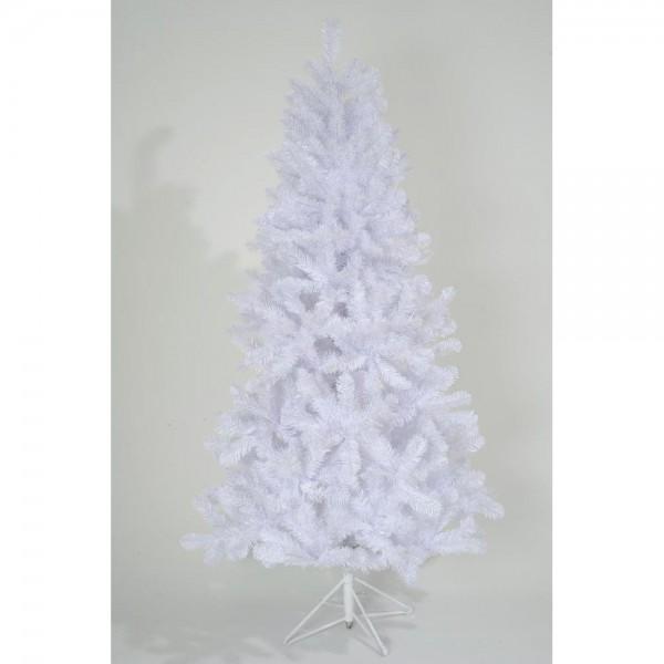 Tanne White Spruce weiß, H 210 cm