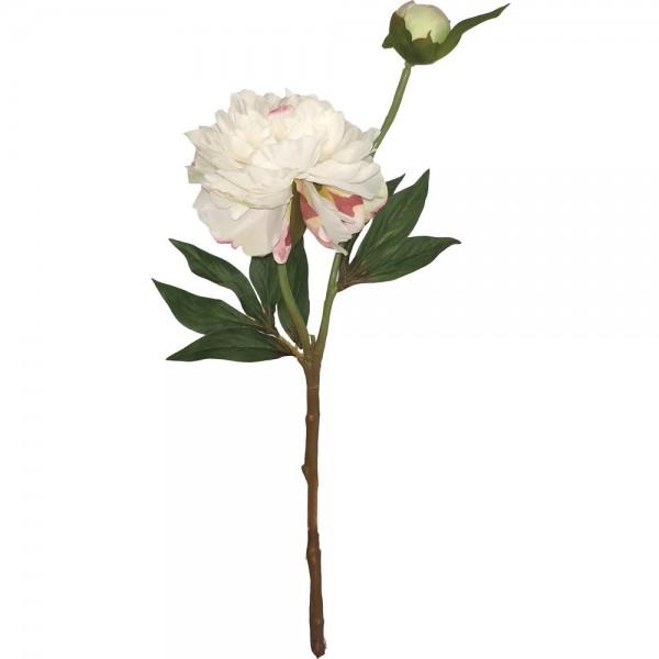Pfingstrose mit Knospe weiß, 37 cm