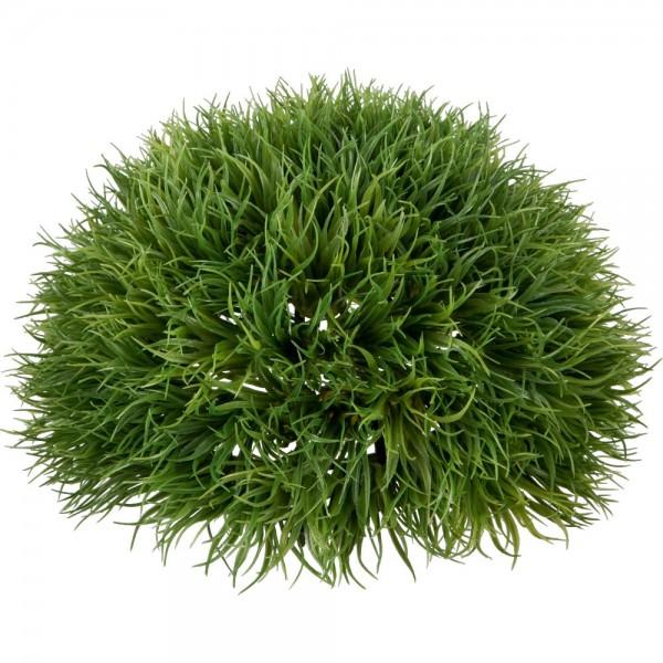 Lavendelgras Halbkugel grün, Ø 21 cm
